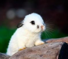Teeny bunny ear.
