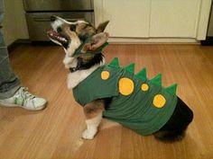 101 mascotas: Como Hacer un disfraz para perro