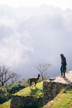 Travel Inspiration for Peru - Baby Llama Machu Picchu