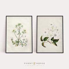 Vintage Floral Prints Set of 2 Prints Vintage Flowers Art