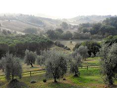 Olivi Toscana,Italy.