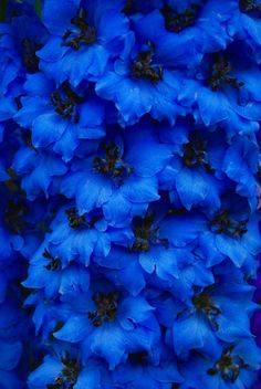 blue flowers, cool for centerpice