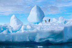 【ペンギン 企鵝 penguin】                   Jonathan Irish   X-Photographers
