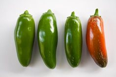 How hot is that jalapeno? Here's a tip to help gauge the level of heat before you buy or pick the pepper.