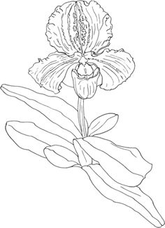 Coloring pages of christmas orchids ~ coloring pages of orchids | coloring page to view ...