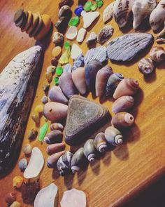 Treasures from the beach