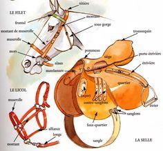 The parts of the net, the saddle and the halter Learn more: the-horse-c-is-t … Les parties du filet, de la selle et du licol En savoir plus : le-cheval-c-est-t… - Art Of Equitation Equestrian Outfits, Equestrian Style, Spirit Der Wilde Mustang, Horse Anatomy, Horse Facts, English Riding, Horse Tips, Horseback Riding, Horse Riding