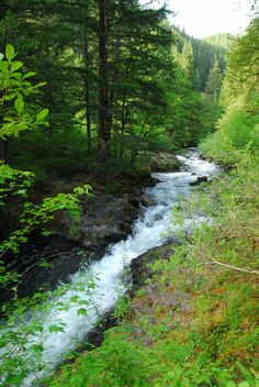 Roaring River Campground in Oregon