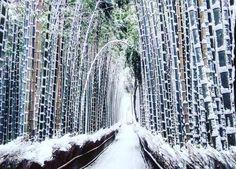 大雪で京都が美しい不思議の国に変貌 週末、京都は気温が摂氏0度を下回るの寒い日でした。 大都市では時々雪が降り…