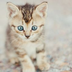 """An inquisitive kitten is the best reminder of what youth is about."" --Author Unknown"