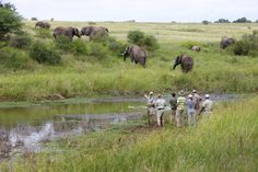 Safari in Kapama Game Reserve All Inclusive Resorts, Hotels And Resorts, Private Games, 2nd City, Game Reserve, Camping World, Walking In Nature, Travel And Leisure, Best Vacations