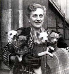 Marjorie Fearfield, fondateur de l'encore existant British Chihuahua Club, montré avec ses chiens dans les photos des années 1940. Top photo est le chien spectacle Crufts.2
