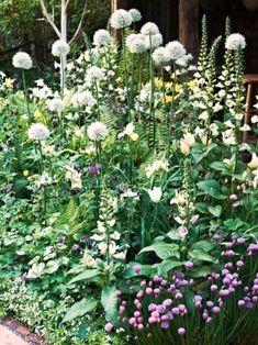 Vita allium, vit löjtnantshjärta, svart stjärnakleja, med mera. French Cottage Garden, Garden Bulbs, Garden Pots, Outdoor Plants, Outdoor Gardens, Prairie Garden, Walled Garden, Woodland Garden, Garden Borders