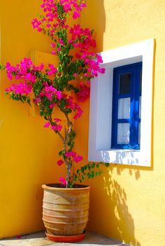 wall of color