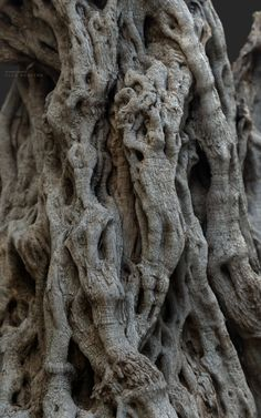 ArtStation - Ancient olive Tree #2 . Two thousand years old , · K o r e y b a · Weird Trees, 3d Portrait, Self Thought, 3d Tree, A Thousand Years, Tree Roots, Drift Wood, Olive Tree, Science Nature