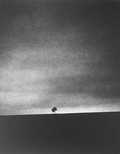 110-33-188-53: photo: Edward Dimsdale - Little Tree Big Sky. 1999