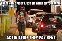 Spiders -.-