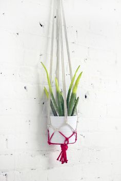 Ispydiy_hangingplanter_Final51.jpg 680×1,020 พิกเซล