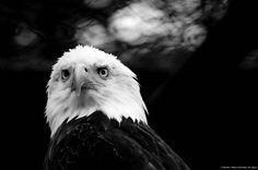 """© Blende, Selina Schneider (14 Jahre), Bad Mood, Thema: """"Schwarzweiß"""" #Fotowettbewerb #Tierfotografie #Schwarzweiß"""