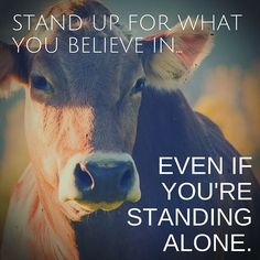 stand up for what you believe in even if you're standing alone #vegan