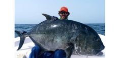 Biggest Trevally Ever Caught?