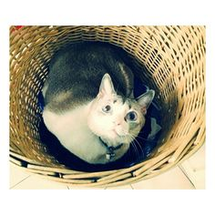 Barley Cat | Pawshake