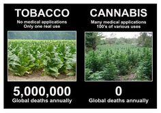 tobacco vs cannabis