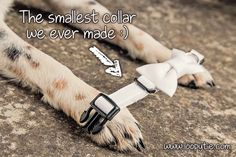 The smallest and tiniest collar we ever made. Length: 23 cm