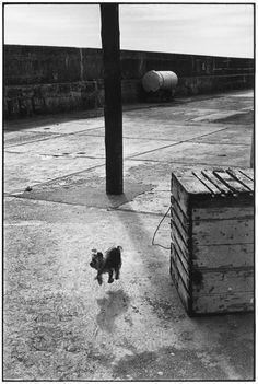 BALLYCOTTON, IRELAND, 1968 | by Elliott Erwitt