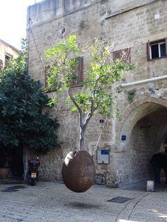 Hanging orange tree. Jaffa, Israel. January 2015.