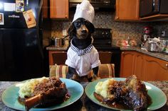 Cooking with Crusoe: Slow-Cooked Lamb & Prunes – Crusoe the Celebrity Dachshund