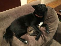 Reddit user YungDemon came home during a storm to find his cat being comforted by his roommate's dog.