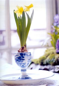 The simplicity of a single miniature Daffodil bulb in a delft egg cup  ~  'FLOWERS' by Carolyne Roehm, Photography by Carolyne Roehm & Sylvie Becquet