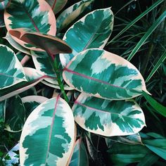 Ficus, Fauna, Botany, Flower Power, Plant Leaves, Texture, Floral, Green, Fabric