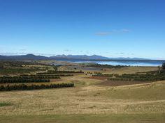 Tasmania Travel, Tasmanian Devil, Endangered Species, Exotic Pets, Travel Guide, Vineyard, Mountains, World, Beach