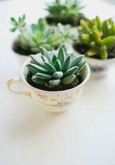 Use antique teacups and succulents to make these fun planters. #garden #succulents #diy