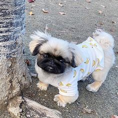 Pekingese Puppies, Cute Animals, Pets, Stylish, Outfits, Pretty Animals, Suits, Cutest Animals, Cute Funny Animals