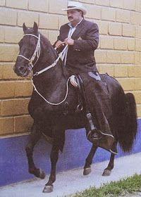CABALLOS COLOMBIANOS: CABALLOS HISTORICOS DEL PASO FINO COLOMBIANO Different Horse Breeds, Beautiful Horses, South America, Equestrian, Pony, Mexico, Brio, Baroque, Spanish