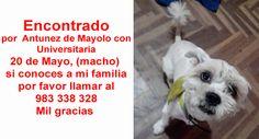 Encontrado por  Antunez de Mayolo con Universitaria 20 de Mayo, (macho) si conoces a mi familia por favor llamar al 983 338 328 Mil gracias  https://www.facebook.com/photo.php?fbid=679291522204529&set=gm.897765243614918&type=1&theater