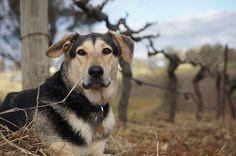 Angus at Blackthorn Hill Retreat farm stay