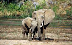 Una madre elefante y su cría #libertad #amor