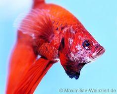 Maximilian Weinzierl – Fotografie – Blog: Aquarium-Fotografie in Perfektion