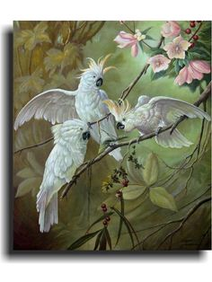 http://www.pinterest.com/cycle301/cockatoos/Cockatoo painting.
