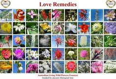 Love Remedies flower essences are a gift of love from nature.This is a new generation of vibrational essences extracted by the Stepanovs Method that was guided by ancient Aboriginal lore. Only the best of pure ingedients are used for the Love Remedies flower essences, blends, aurasprays and the invironment sprays.  They are always made with the highest respect to nature.
