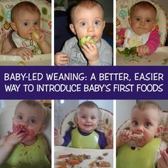 Baby Led Weaning is simple: you let your child feed themselves from the very first time you introduce solid food. No spoon-feeding. No homemade baby food. No spending money on jarred baby food. - See more at: http://www.thisisrealnatural.com/2013/08/10/baby-led-weaning-a-better-easier-way-to-introduce-babys-first-foods/#sthash.Fzanpccm.dpuf