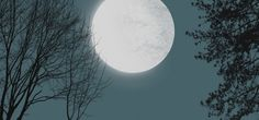 Moon With Tree Silhouettes
