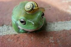 so cute!  Is that a White's tree frog? aww.. I miss my Mr. Flippers.