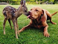 Dog and Fawn Get Cozy in the Park