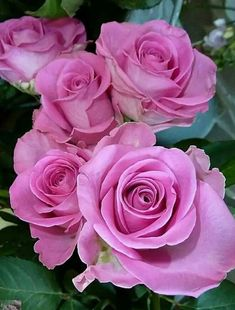 All Flowers, Flowers Nature, Pretty Flowers, Photo Rose, Roses Only, Love Rose, Purple Roses, Flower Pictures, Beautiful Roses