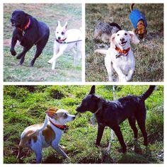 Lil' guys taking over the fields! #evasplaypupsPA #dogs #dogscamp #doggievacays #dogsinnature #runfree #smilingdogs #bffs #dogsofinstagram #autumn #sweaterweather #endlessmountains #mountpleasant #PA #pennsylvania